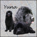 honden foto Collage van Yuna (With thanks to judith)!