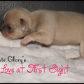 honden foto Ultimate Glory's Love at First Sight