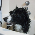 honden foto woody in de douche