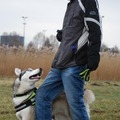 honden foto Doggy dance training