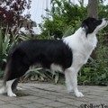 honden foto Follow You Home Believe It Or Not ´Kaely´