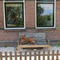 honden foto Protecting the house (not)