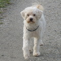 honden foto Pepijntje tijdens zijn vakantie op Texel.