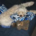 honden foto zo, ik lig weer lekkerrrrr...