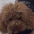 honden foto