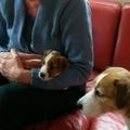 honden foto Lola en haar moeder bij het ophalen.