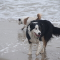 honden foto Fly en Hunter