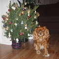 honden foto Jingle Bells