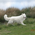 honden foto Hinto on the move