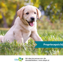 Pet College: Propriocepsis bij pups